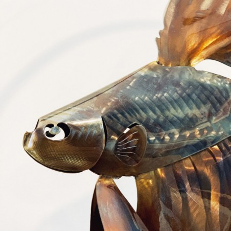 Singnathe - Hippocampe Feuille