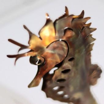 Hippocampe XS - Bronze