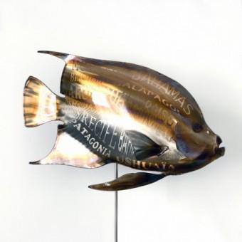 Poisson Ange Kokomo