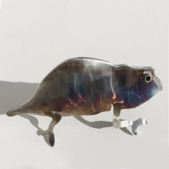 Apogon Koï