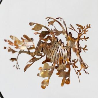 Hippocampe Feuille - M
